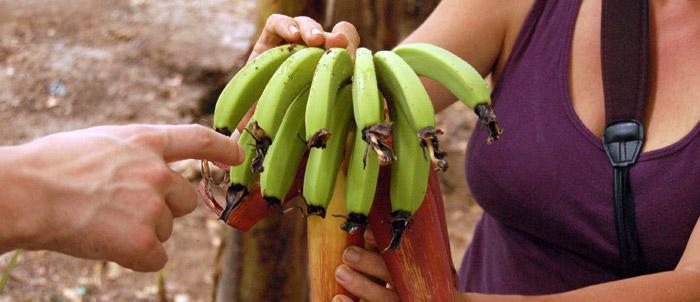 bananiny_rastu_rastu