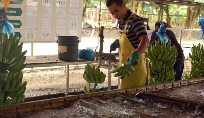vykrajujeme_banany_a_vhodime_do_vody